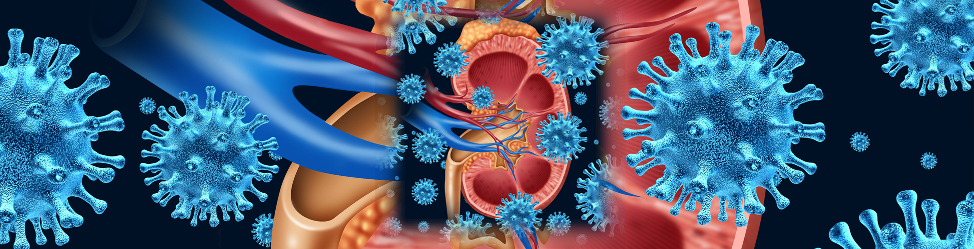 Kidney animation slider image